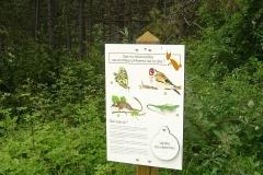 Panneau présentant quelques espèces animales présentes ou susceptibles d'être présentes sur le site forestier.