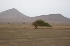 Couvrir le Cap Vert de forêts d'ici un siècle !