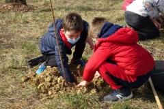 Plantation sur le site de la création forestière pédagogique biodiverse de Varois et Chaignot.