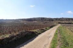 Agroforesterie viticole à Marsannay la Côte