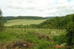 5 juin 2018. Site de la reforestation pédagogique biodiverse de Reulle-Vergy.