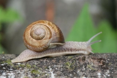 Article-escargot-2-Small-