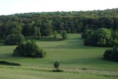 Saut de puce ou comment progressent les forêts