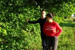 La première création forestière. Lalande de Pomerol. 2017.