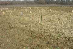 Plantation-Morey-St-Denis-10-mars-2011-009