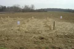 Plantation-Morey-St-Denis-10-mars-2011-010