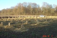 Vendredi 2 décembre 2016. Création forestière pédagogique biodiverse de Saint Julien. Huitième bosquet planté !