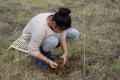 Plantation amicale organisée le 20 novembre 2016 sur le site de la création forestière pédagogique biodiverse de Morey Saint Denis.
