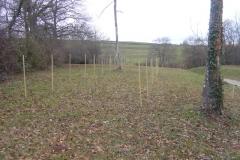 Pose des jalons le 2 décembre 2012. Création forestière pédagogique biodiverse d'Arnay le Duc