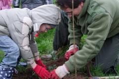 Démonstration de plantation d'un plant en godet par Jean-Noël CABASSY de l'ONGE Forestiers du Monde®. jeudi 25 novembre 2010. Création forestière pédagogique biodiverse d'Arnay le Duc.