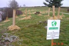 Installation des bosquets 25-11-2010 026 (Small)