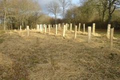 plantation second bosquet 5-12-2011 006 (Small)