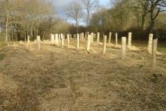 plantation second bosquet 5-12-2011 006 (Small)