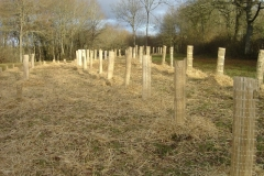 plantation second bosquet 5-12-2011 007 (Small)