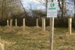 plantation second bosquet 5-12-2011 008 (Small)