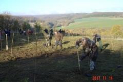 Creusement des 100 trous par les parents bénévoles. Reforestation pédagogique biodiverse de Reulle Vergy. 14 novembre 2017.
