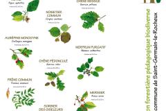 La face verso du second panneau présente quelques unes des 50 espèces végétales qui composent cette plantation biodiverse. Création forestière pédagogique  de Saint Germain le Rocheux. Lundi 21 mars 2016.