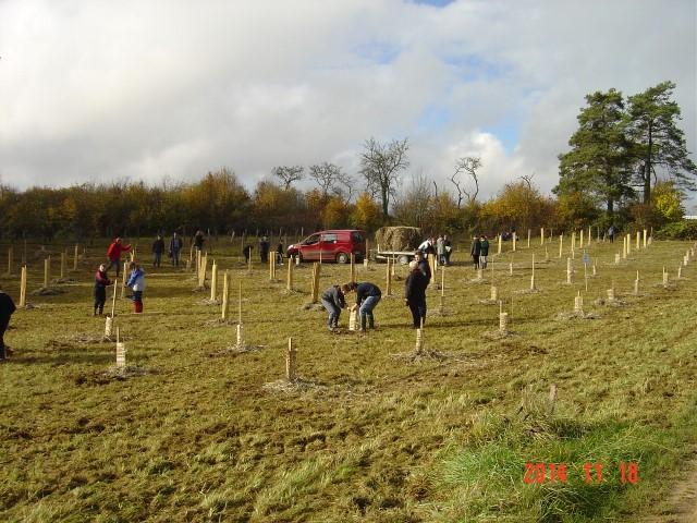 Les collégiens plantent et paillent les plants. Création forestière pédagogique biodiverse de Saint Germain le Roheux. 18 novembre 2014.