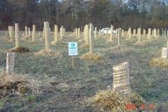 Plantation du neuvième bosquet biodivers. Vendredi 17 novembre 2017. Création forestière pédagogique biodiverse de Saint Julien