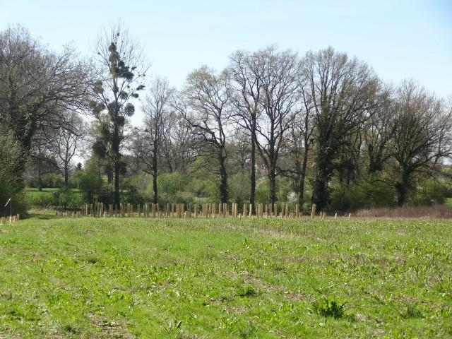 Plantation 6 avril 2014 032 (Small)