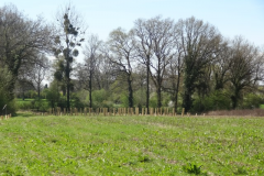 Plantation-6-avril-2014-032-Small