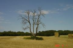 Arbre-mort-08-2009-002-Small