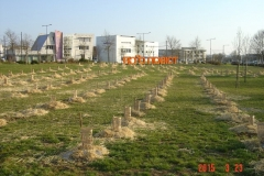 Plantation-bosquets-Toison-dOr-21-mars-2015-001-Small