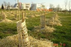 Plantation-bosquets-Toison-dOr-21-mars-2015-002-Small