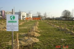 Plantation-bosquets-Toison-dOr-21-mars-2015-005-Small