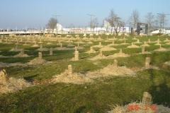 Plantation-bosquets-Toison-dOr-21-mars-2015-007-Small