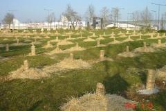 Plantation-bosquets-Toison-dOr-21-mars-2015-008-Small