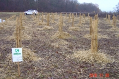 Plantation du neuvième bosquet biodivers. Création forestière pédagogique de Saint Julien. Vendredi 30 novembre 2018