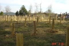 cfpb-Savigny-plantation-mars-2014-003-Small