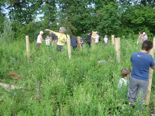 Installation des grandes protections biodégradables en bambou. Réhabilitation pédagogique biodiverse de Villers-la-Faye. Année scolaire 2010-2011.