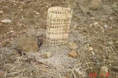 rff-Villers-bambou-Small-