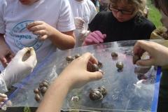 rff-Villers-escargots-2-Small-
