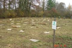 Plantation-St-Julien-23-11-2012-003