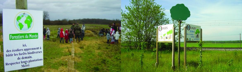 Étapes de la création forestière